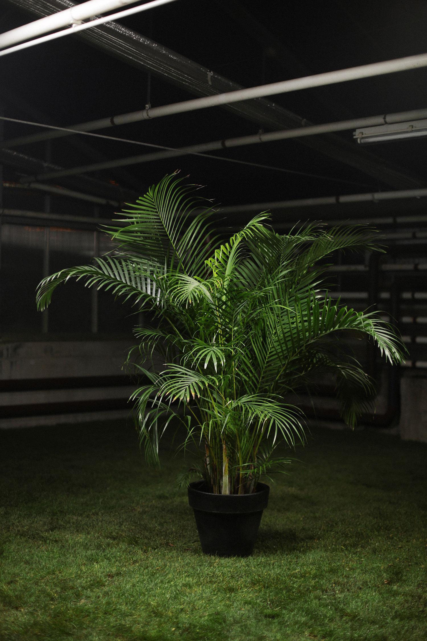 location de plantes strasbourg colmar mulhouse b le. Black Bedroom Furniture Sets. Home Design Ideas